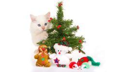 Кремовый котенок прячется за елкой