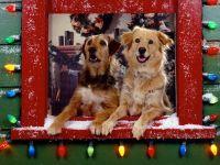 Две собаки, выглядывающие из окна