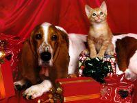 Бассетхаунд и котенок