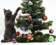 Британская кошка украшает елку