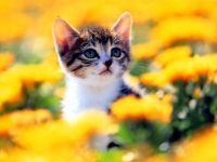 Котенок в траве, фото обои для рабочего стола