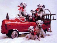 Щенки далматина на пожарной машине