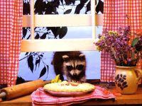 Енот пытающийся украсть пирог, фото обои для рабочего стола,