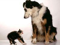 Котенок и собака, фото обои для рабочего стола, смешная