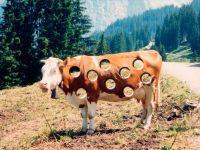 Корова в дырках, дырявая корова, фото обои для рабочего стола