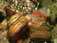 Брюхоногие моллюски фото обои, фотография
