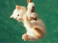 Белый котенок висит на веревке