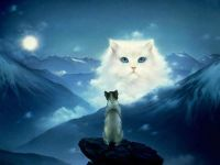 Кошачьи мечта