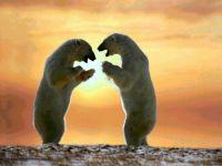 Танцующие белые медведи обои