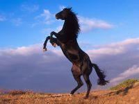 Лошадь стоящая на дыбах