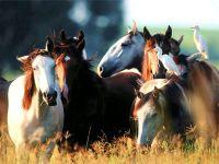 Лошади и цапли
