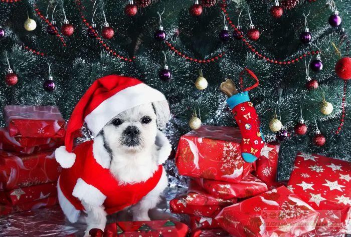 Картинки по запросу животные в новогоднем костюмчике
